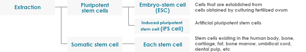 Types of Stem Cells